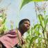 corn farmer in Malawi