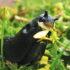 black slug eats a flower