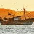 fishing boat on ocean
