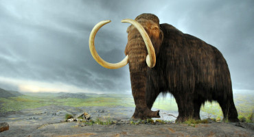 illustration of a mammoth