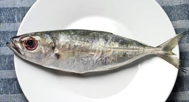 sardine on a white plate