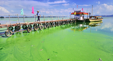 algae_bloom_china_1170