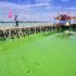algae_bloom_china_1170