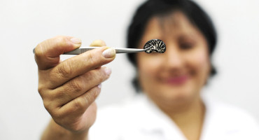 scientist holds striped bean in tweezers