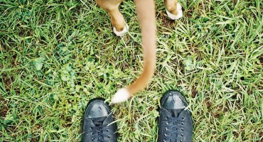 dog's tail & sneakers - toxocara canis