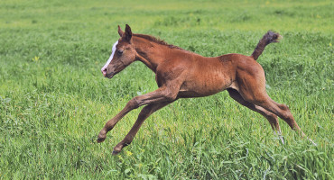 """The behavioral abnormalities in these foals seem to resemble some of the symptoms in children with autism,"" says John Madigan. (Credit: iStockphoto)"
