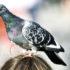 pigeon on girl's head