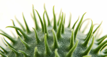 spikes on a round green object