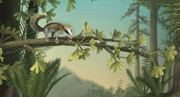 Artist's impression of the tree-dwelling Agilodocodon scansorius