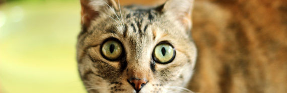 cat with green eyes - Niemann pick story