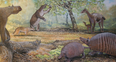 ancient South American mammals
