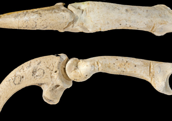 eagle talons from Neanderthal jewelry
