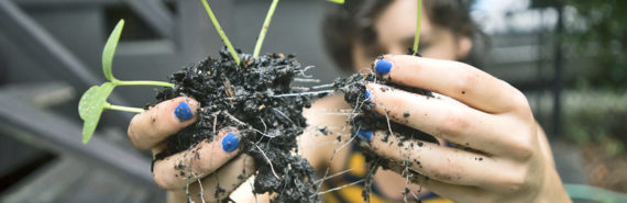 person with blue nail polish holds plant with roots
