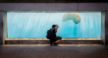 man photographs a polar bear