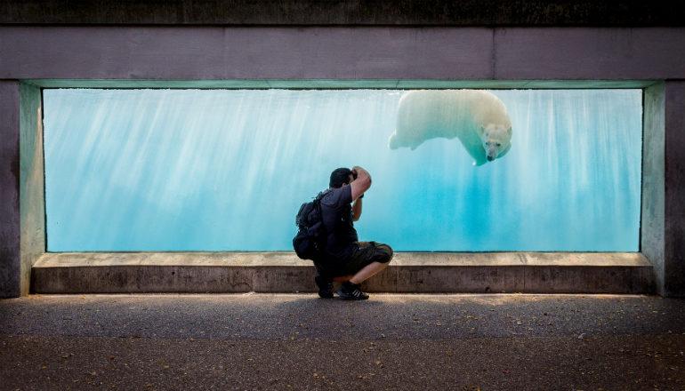 man photographs a polar bear