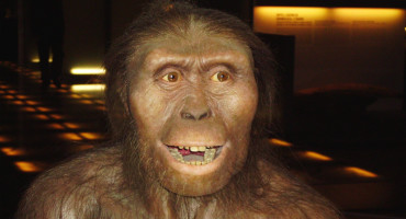 reconstruction of Australopithecus afarensis