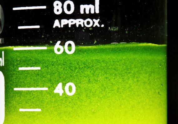 algae for biofuel in lab glass