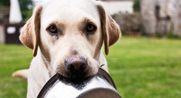 dog holds dish in mouth
