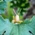 garden with grasshopper needs repellent
