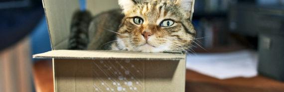cat squeezed in box