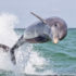 "Bottlenose dolphin. (Credit: ""dolphin"" via Shutterstock)"