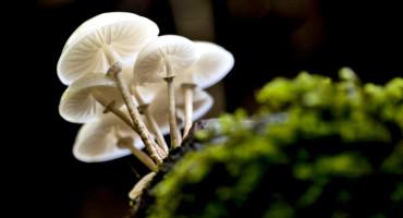 white mushrooms and moss