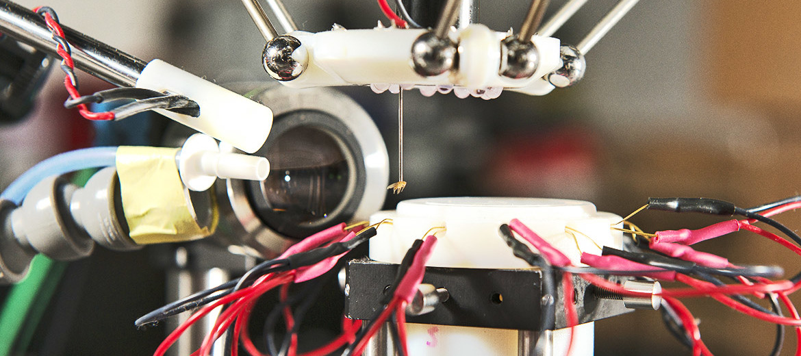 A fruit fly hangs unharmed at the end of the robot's suction tube. (Credit: L.A. Cicero/Stanford News)