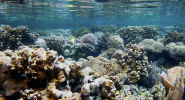 coral reef in Palau