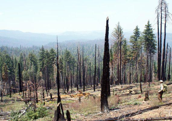 aftermath of Rim fire in Yosemite