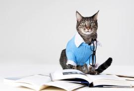 scholarly cat wears sweater