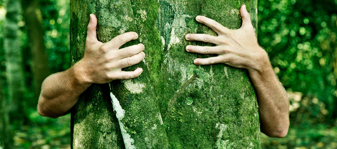 tree hugger's hands