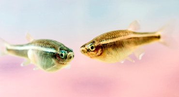 two minnows