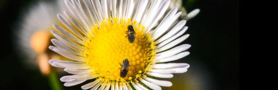 two flies on a flower