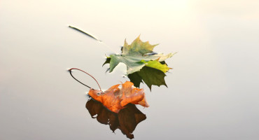 two leaves on puddle