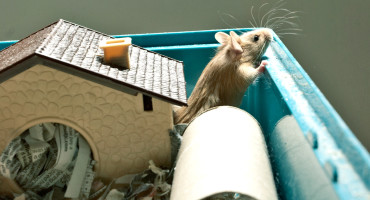 mouse with house and tube
