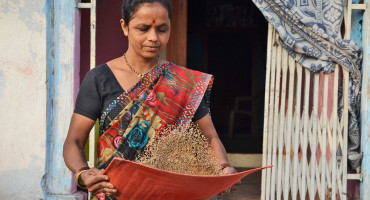 woman tosses pearl millet