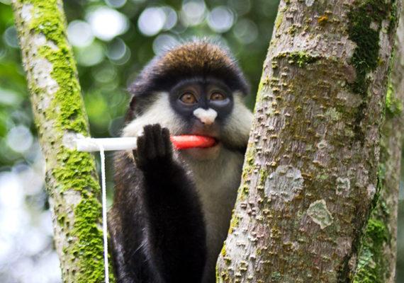 monkey with jam on rope