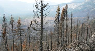 Angora fire in California