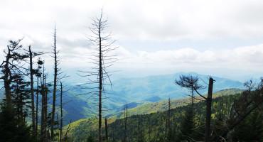 dead trees in North Carolina