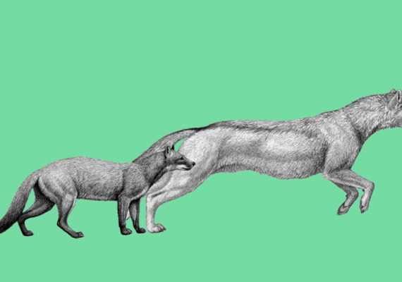early dog species