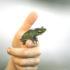 frog on a finger