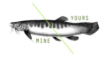 sharing a fish