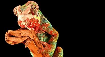 chameleon on branch: tree of life