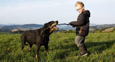 boy and dog with stick