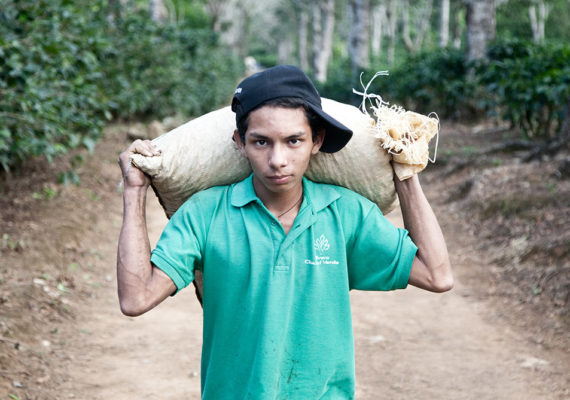 young Nicaraguan man carries coffee beans