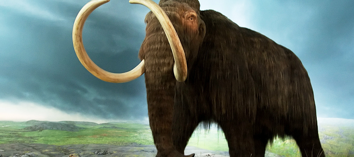 mammoth illustration
