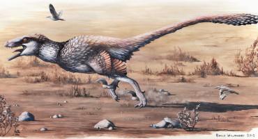 Dakotaraptor illustration