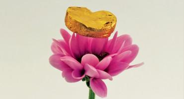 gold foam on flower