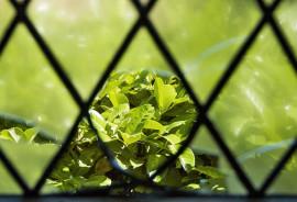 plant through green diamonds