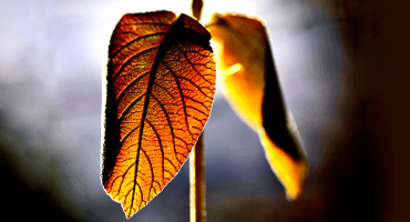 glowing plant leaves - crops
